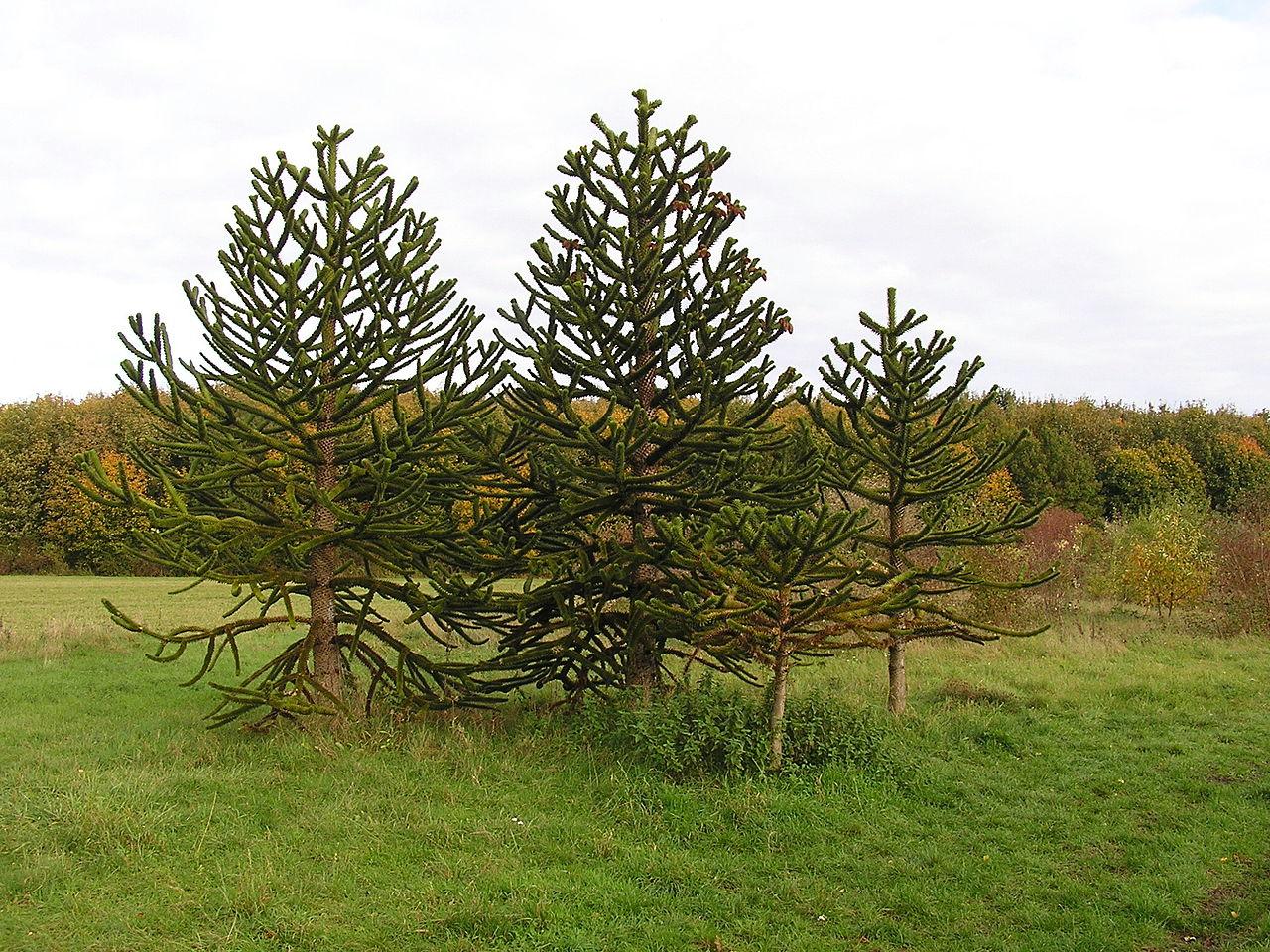 Bild Arboretum Main Taunus