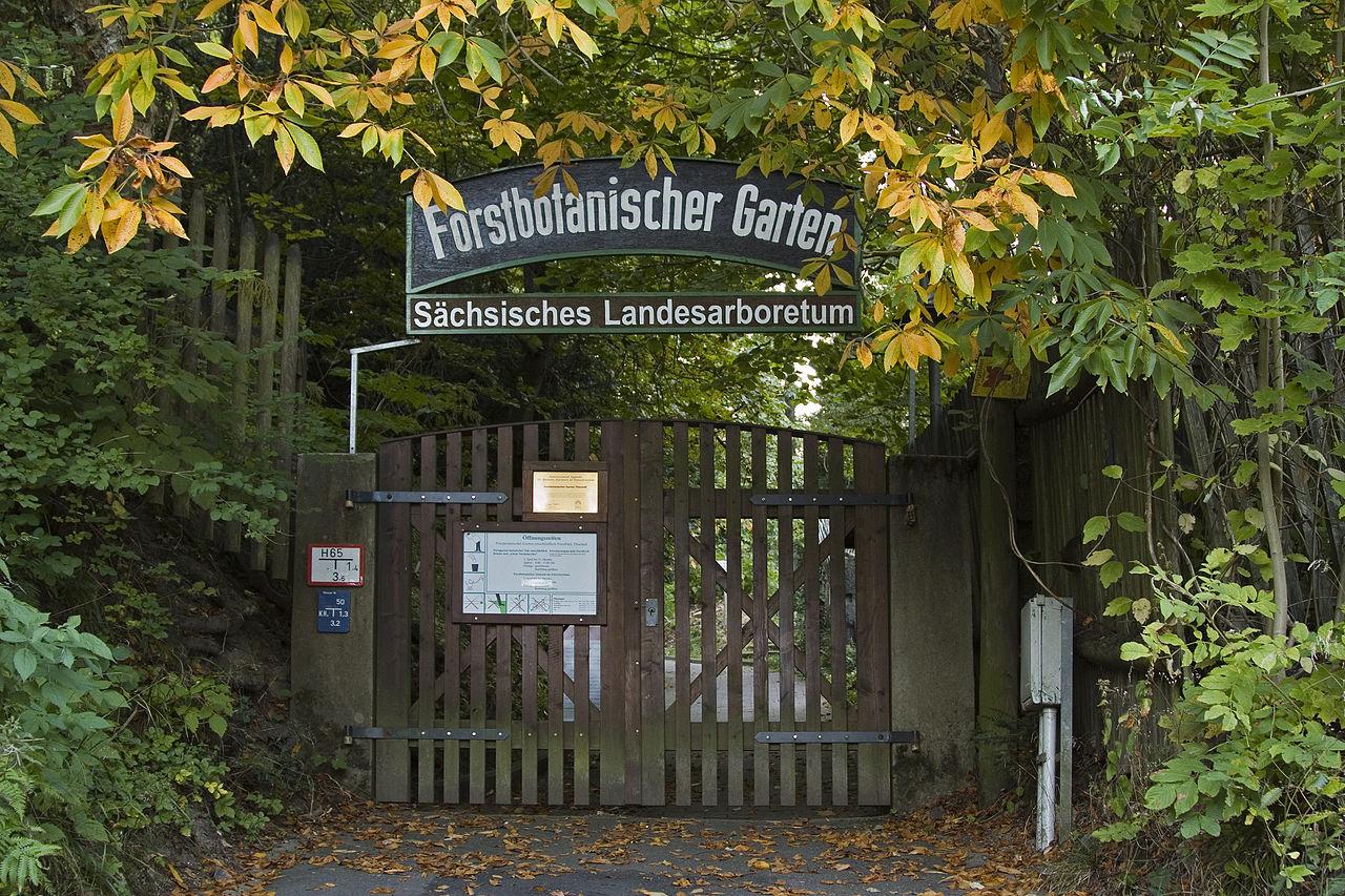 Bild Forstbotanischer Garten Tharandt