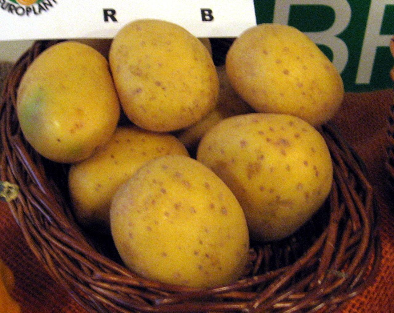 Bild Kartoffelmuseum Brillit