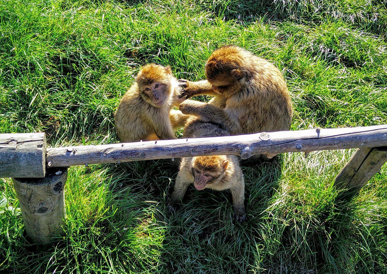 Bild Affen und Vogelpark in Reichshof