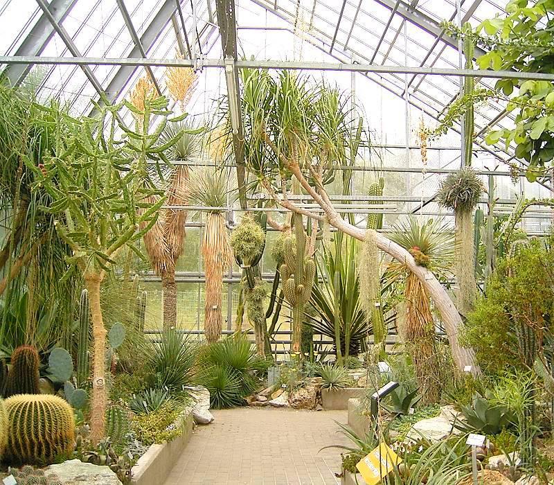 Botanischer garten bonn mit parkartig angelegtem arboretum for Plantas para invernadero