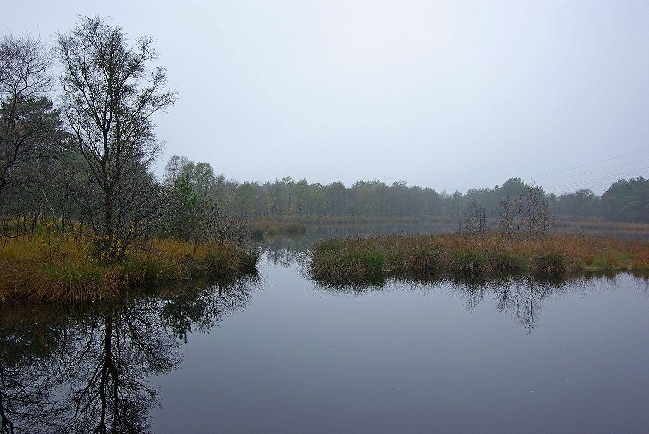 Bild Moorwanderung durch das Bockhorner Moor