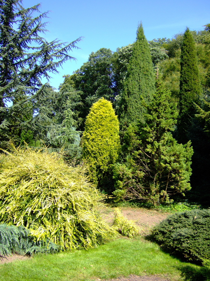 Bild Arboretum Park Härle Bonn