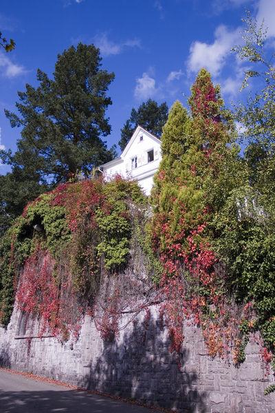 Bild Brahms Haus Baden Baden