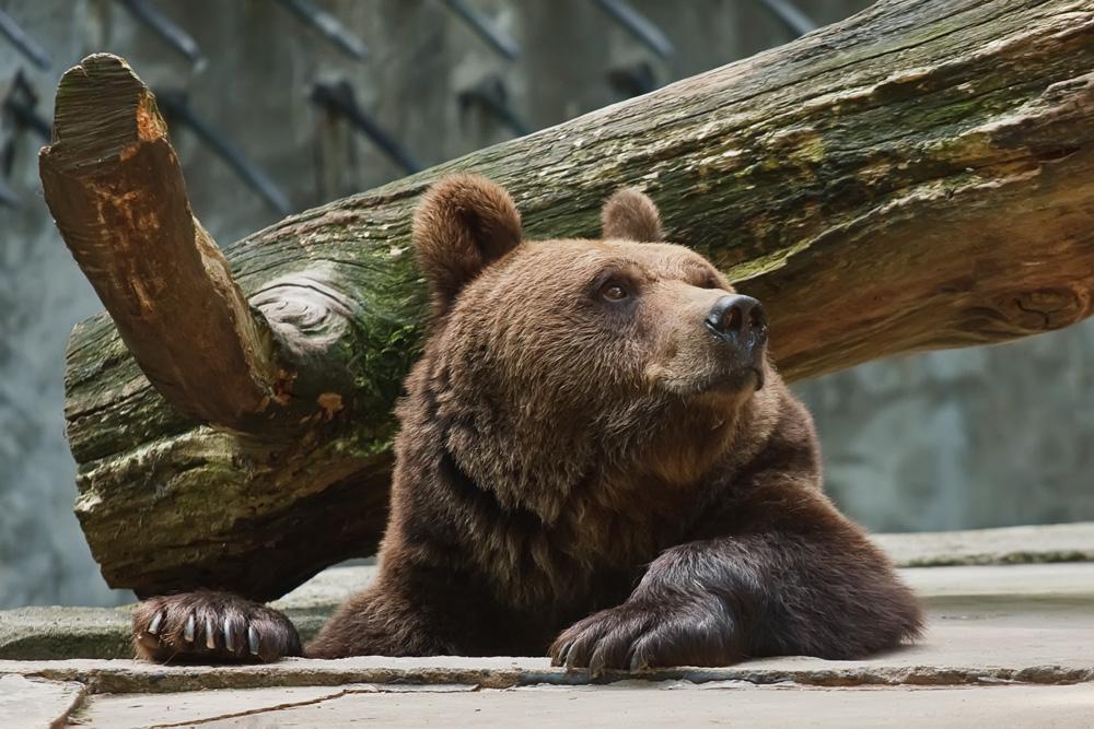 Bild Tierpark Wolgast