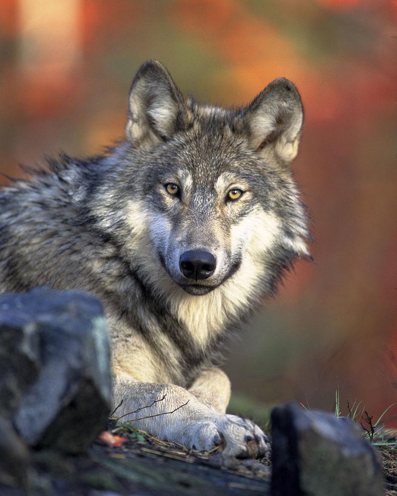 Bild Wolfspark Merzig