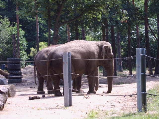 Bild Tierpark Cottbus