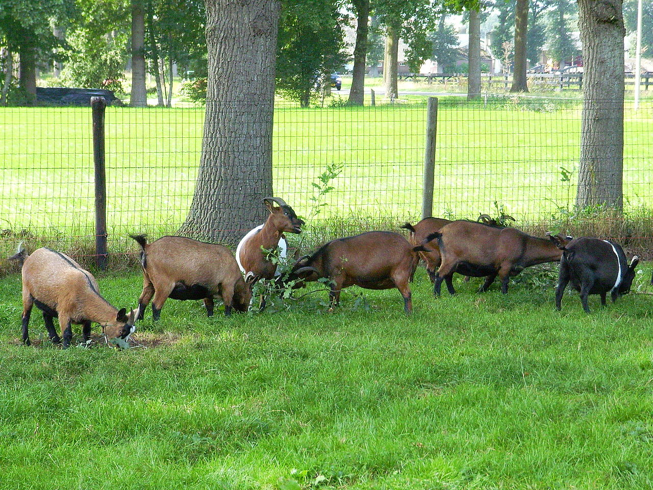 Bild Tierpark Schönewald Birkenfeld