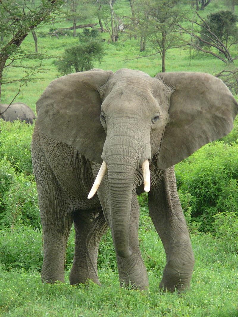 Bild Elefantenhof Platschow