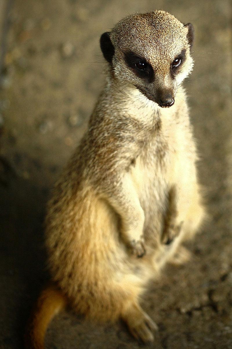 Bild Zoo Hoyerswerda