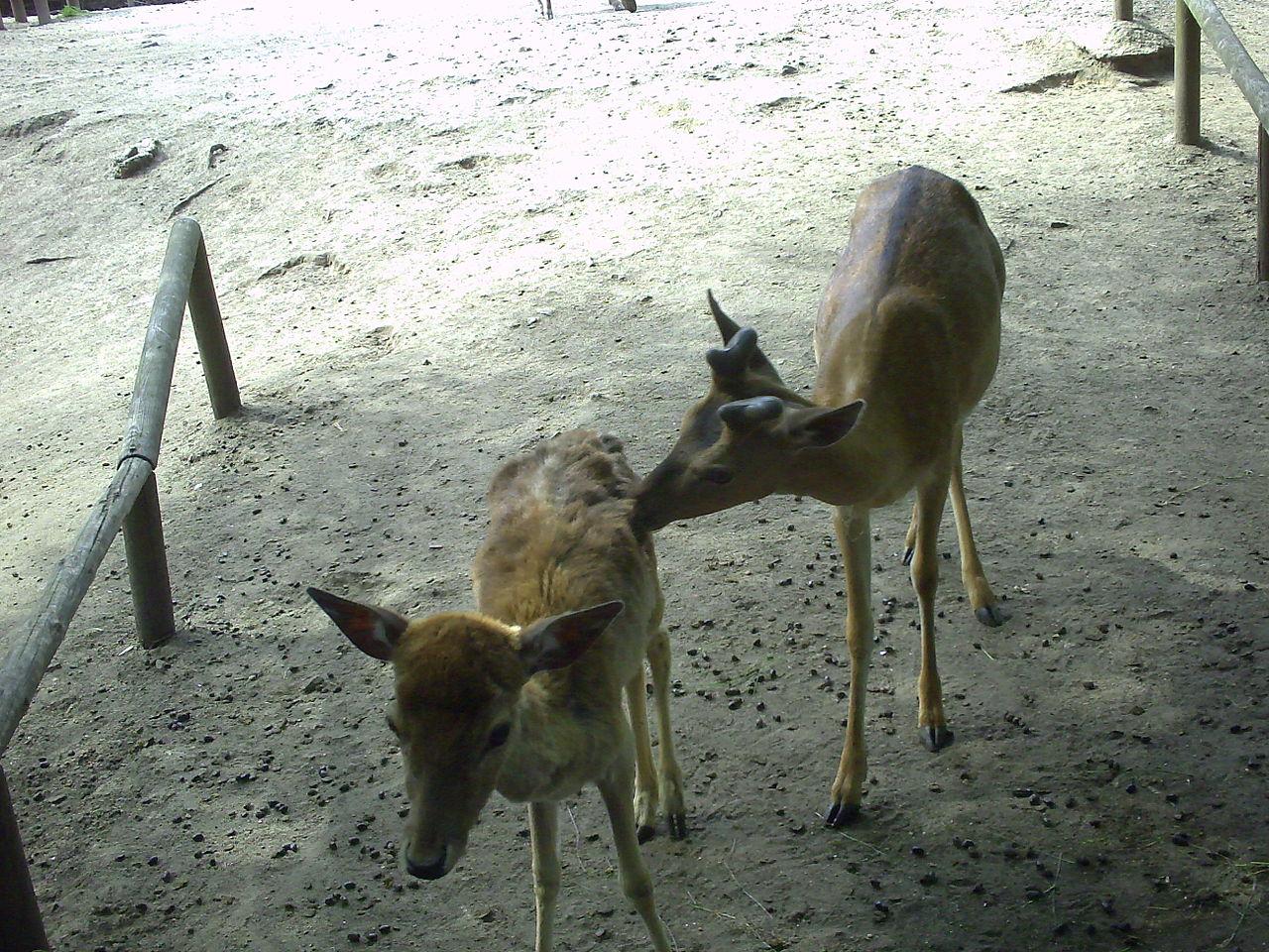 Bild Tierpark Weißwasser