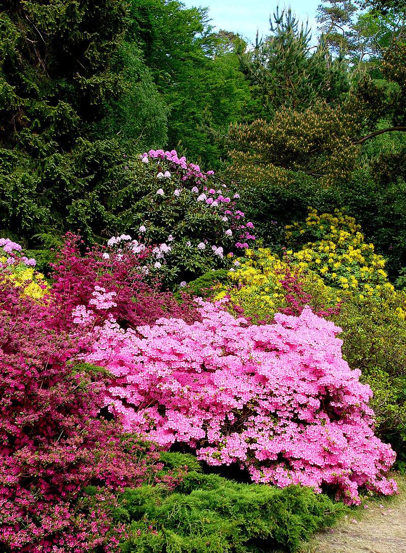 Bild Rhododendronpark Graal-Müritz