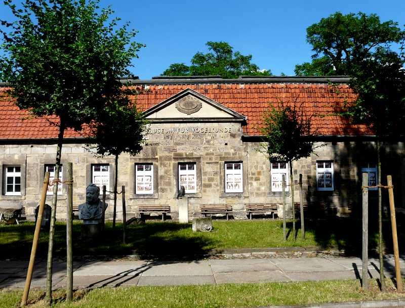 Bild Museum Heineanum Halberstadt