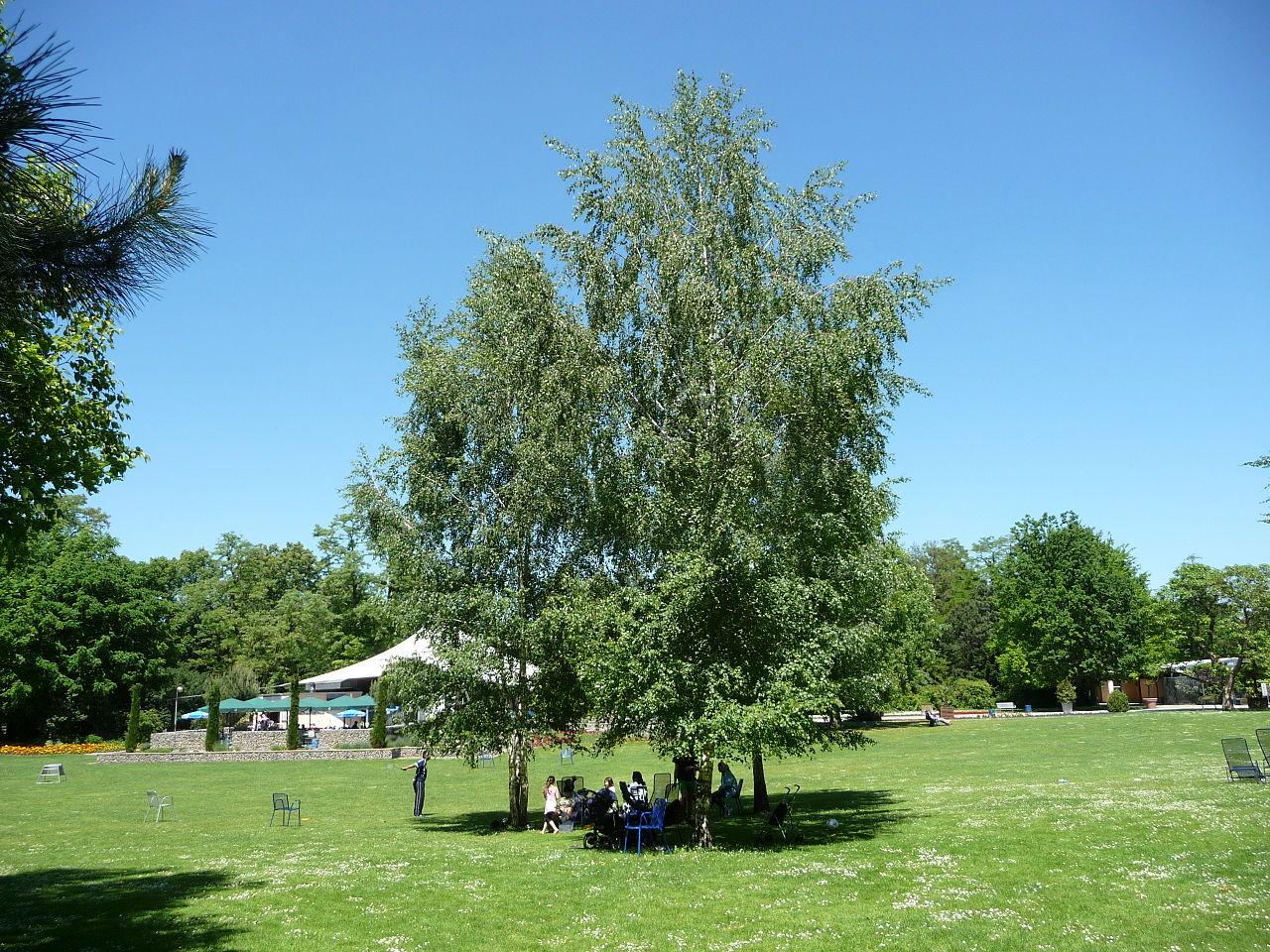 Bild Herzogenriedpark Mannheim
