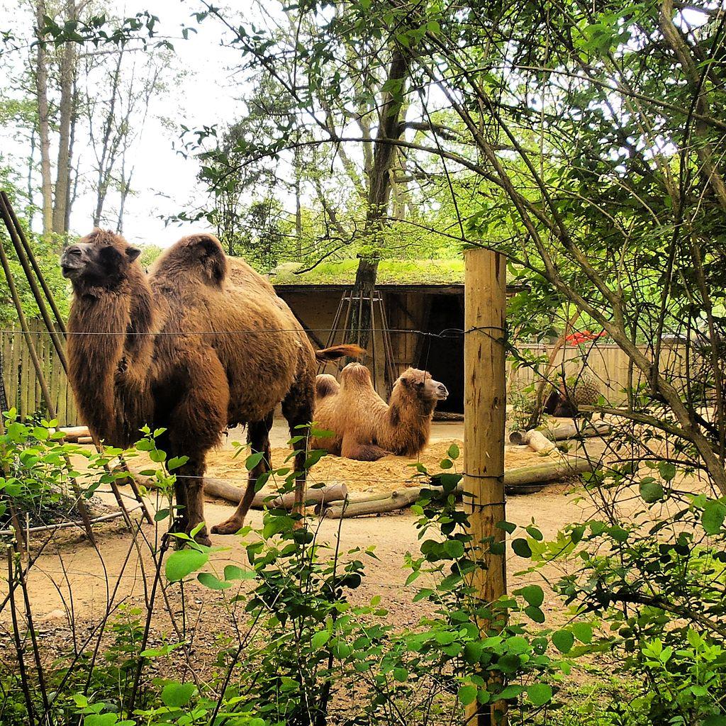 Bild Tierpark Zittau