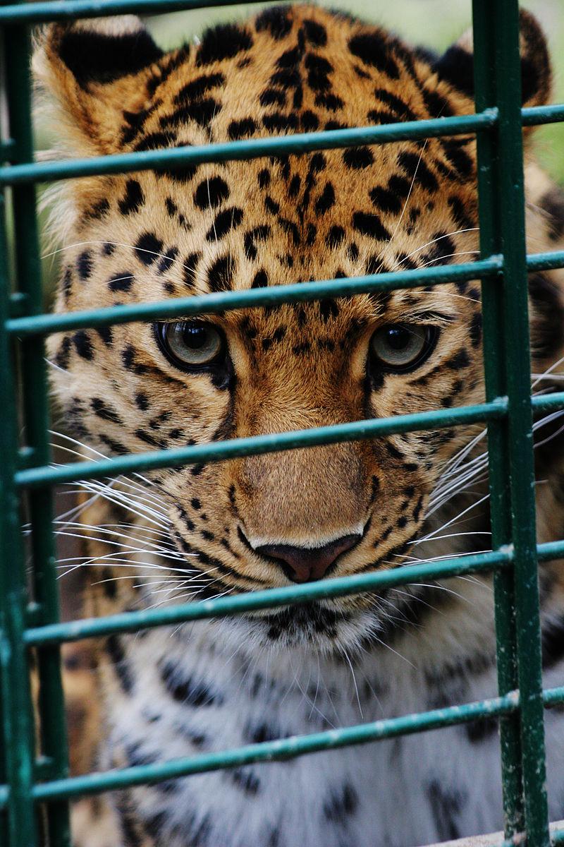 Bild Zoo Dortmund