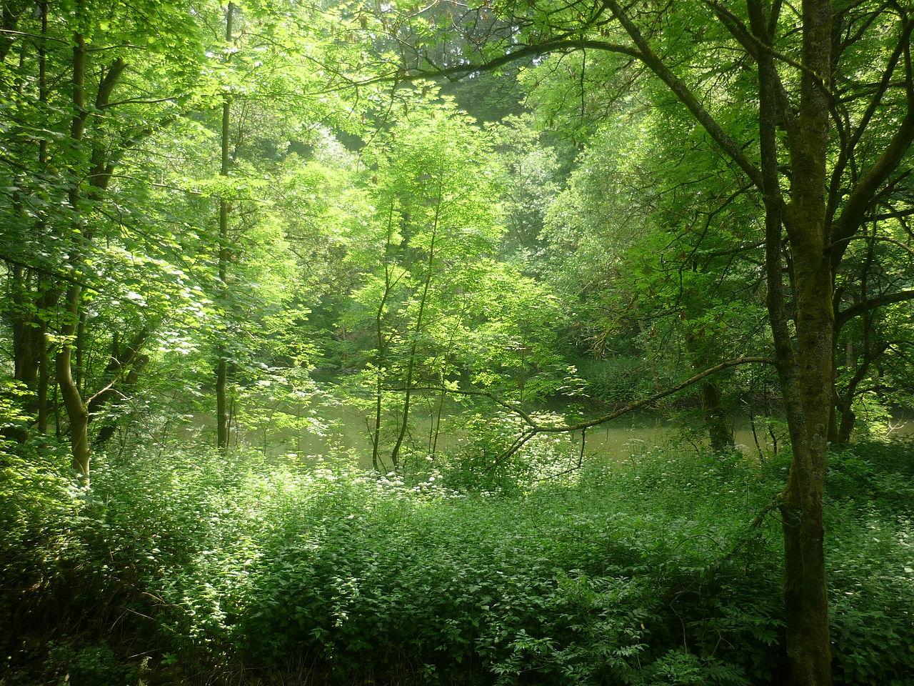 Bild Naturreservat Bacher Lay