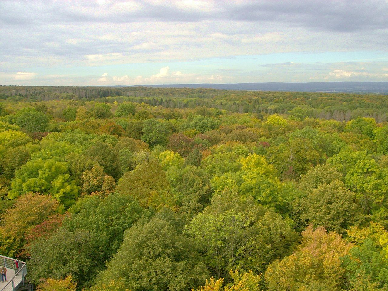 Bild Nationalpark Hainich