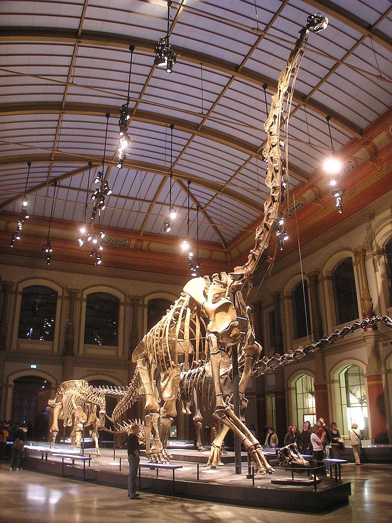 Bild Museum für Naturkunde Berlin