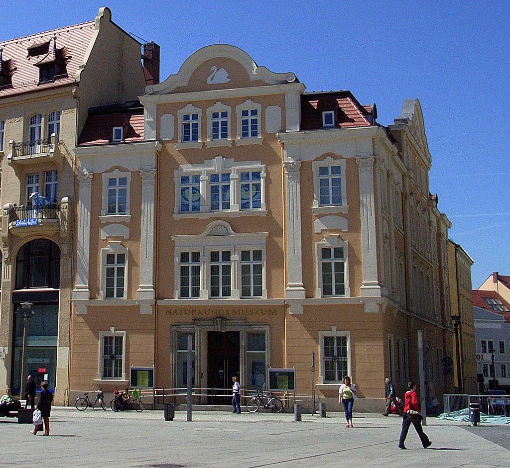 Bild Senckenberg Museum für Naturkunde Görlitz