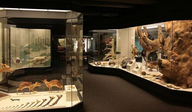 Bild Naturmuseum Augsburg