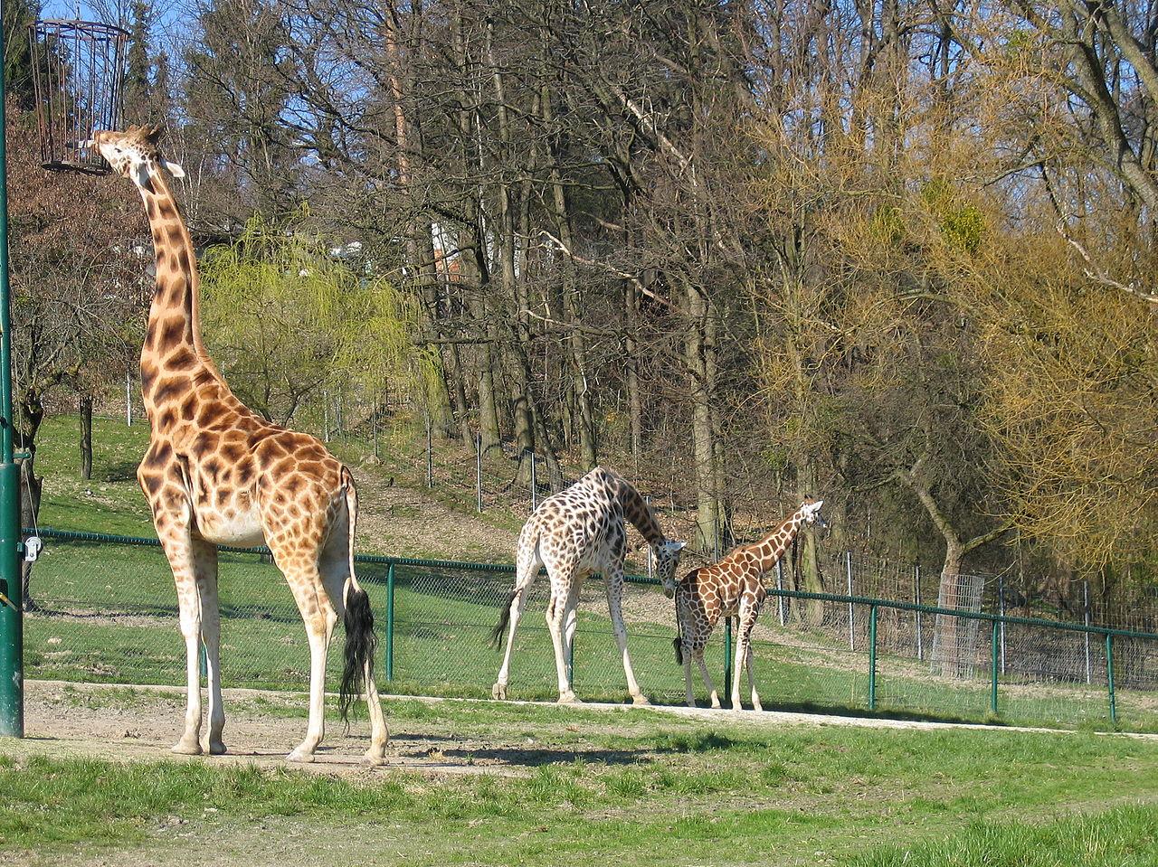 Bild Opel Zoo Kronberg