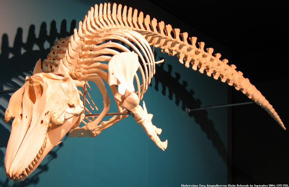 Bild Zoologisches Museum Hamburg