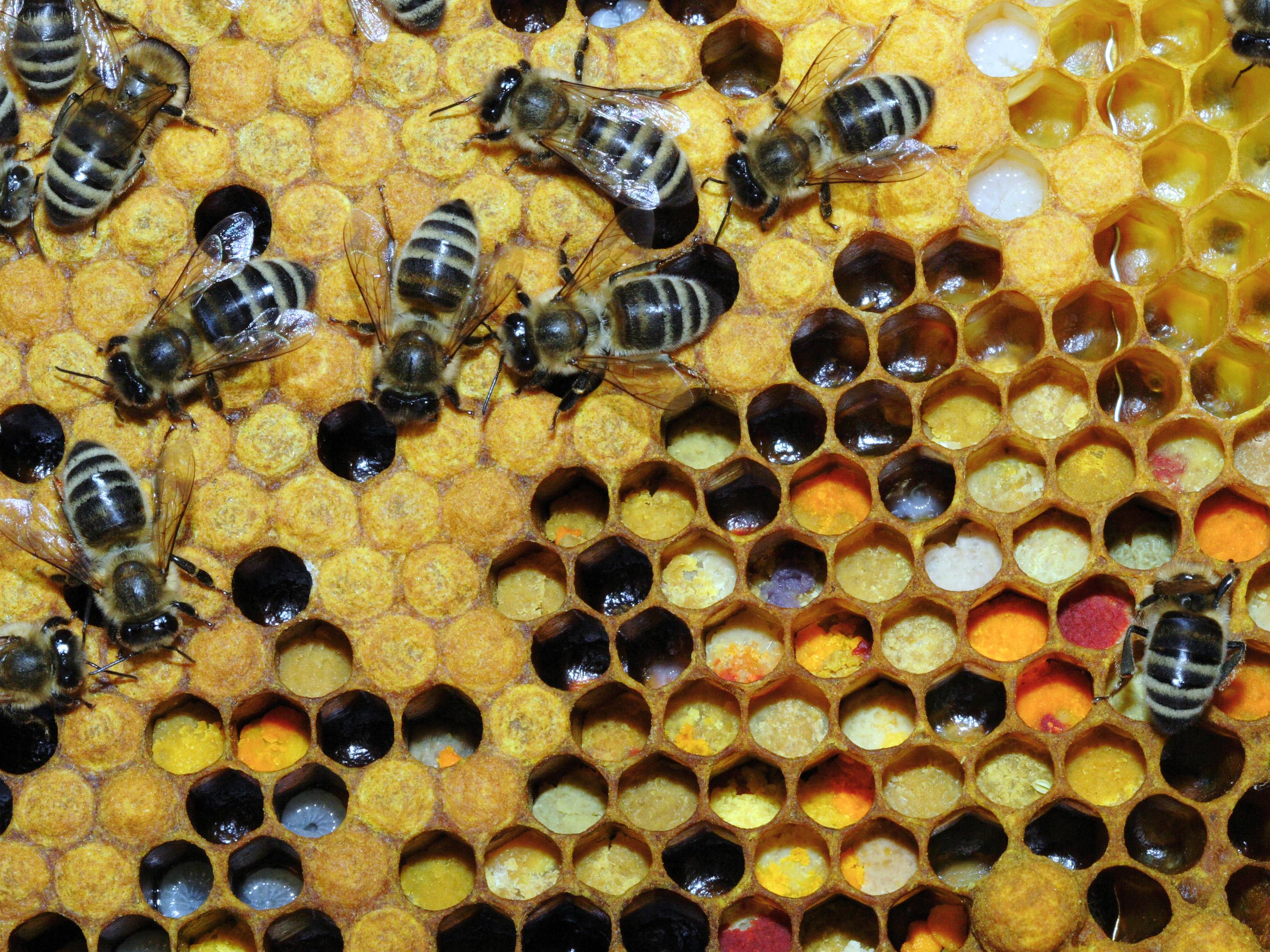 Bild Bienenmuseum Duisburg