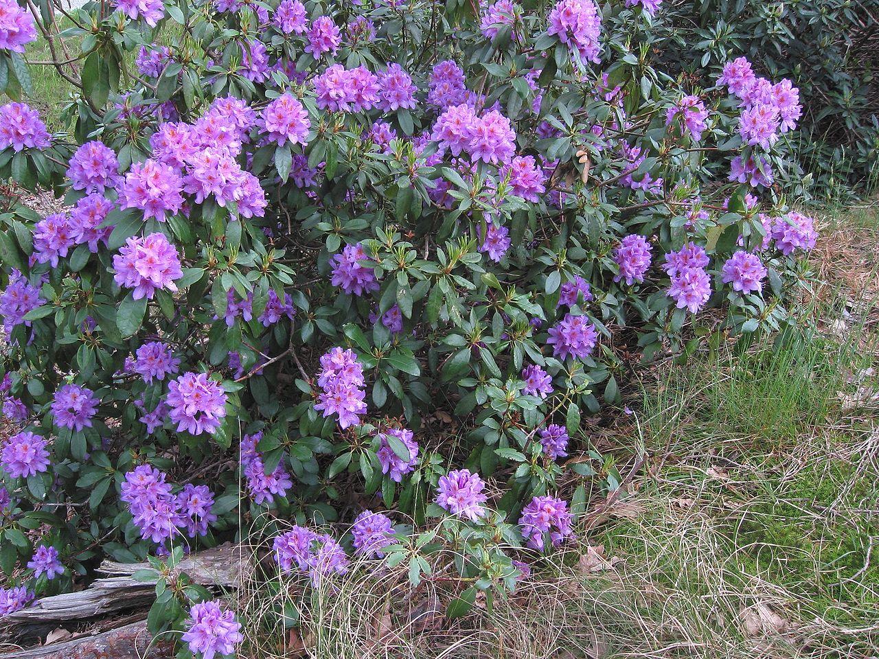 Bild Rhododendronpark Tabarz