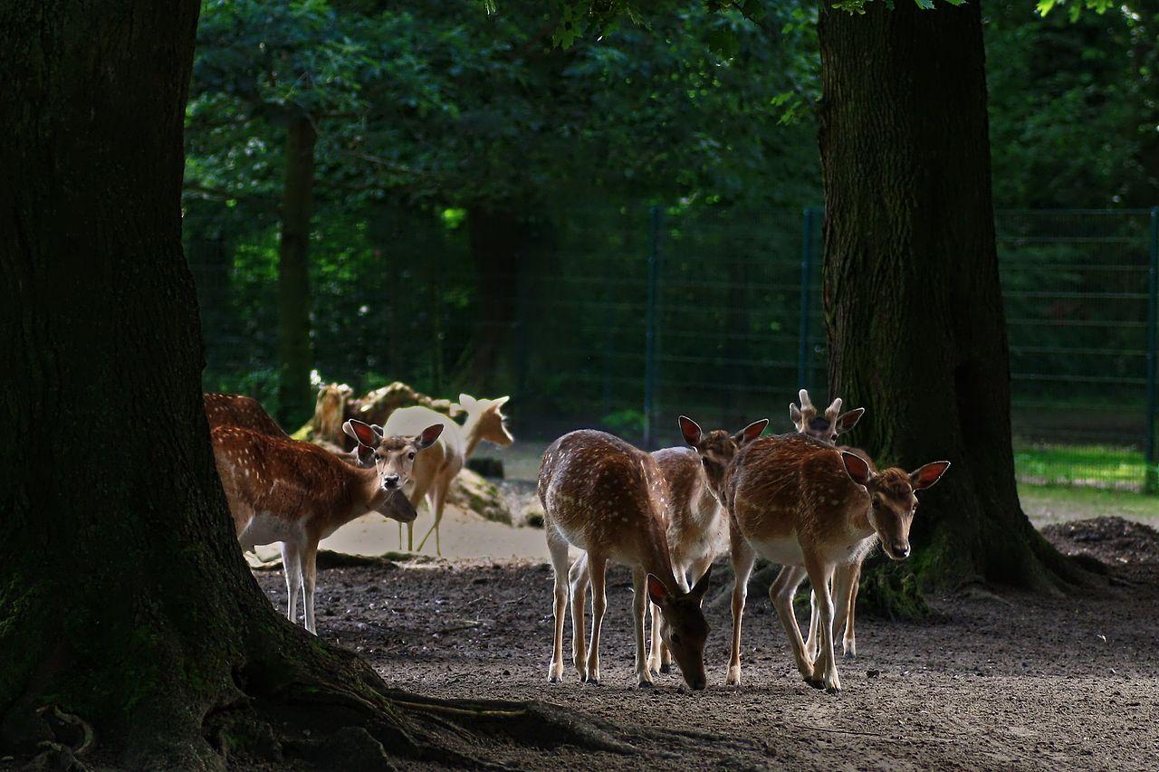 Bild Tierpark Angermünde