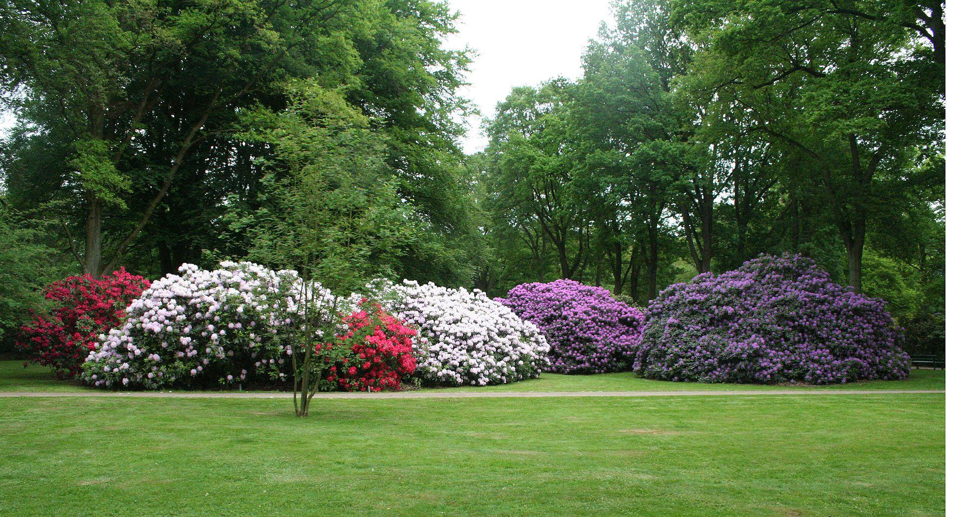 Schön Gartengestaltung Bremen Schema