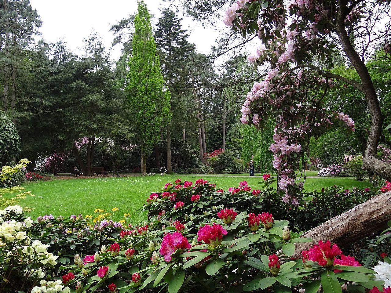 Bild Hobbie Rhododendronpark Westerstede