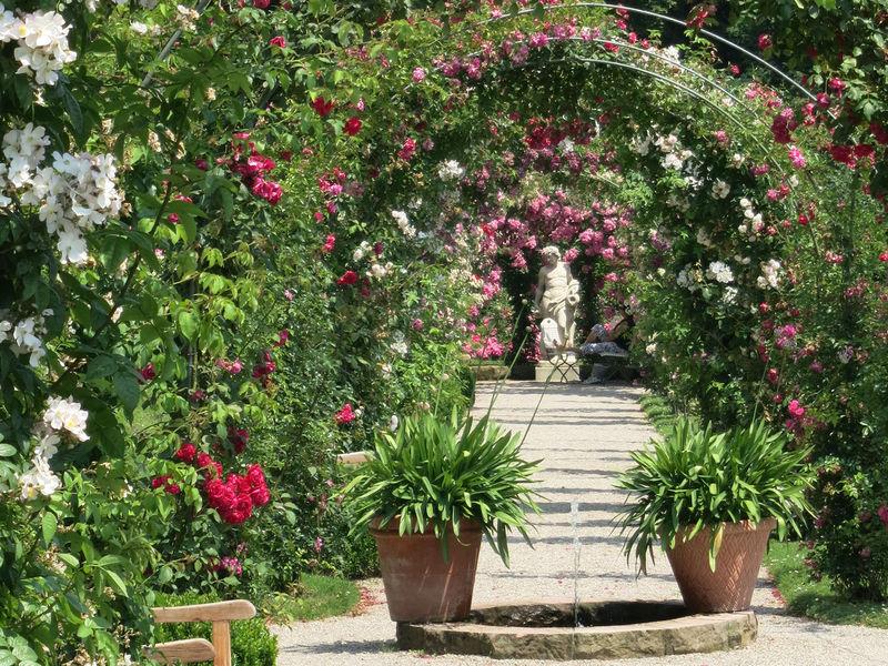 Bild Internationaler Rosenneuheitengarten auf dem Beutig Baden Baden