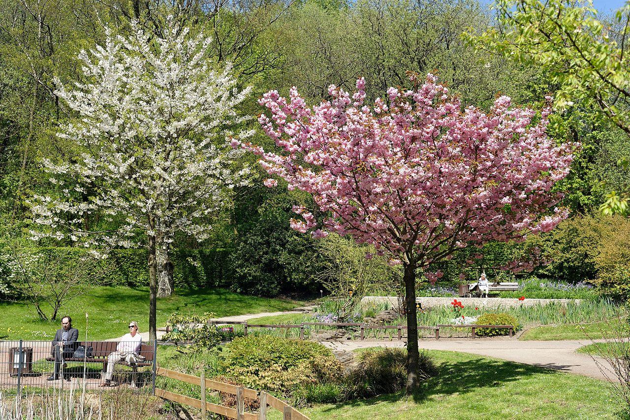 Bild Botanischer Garten Solingen