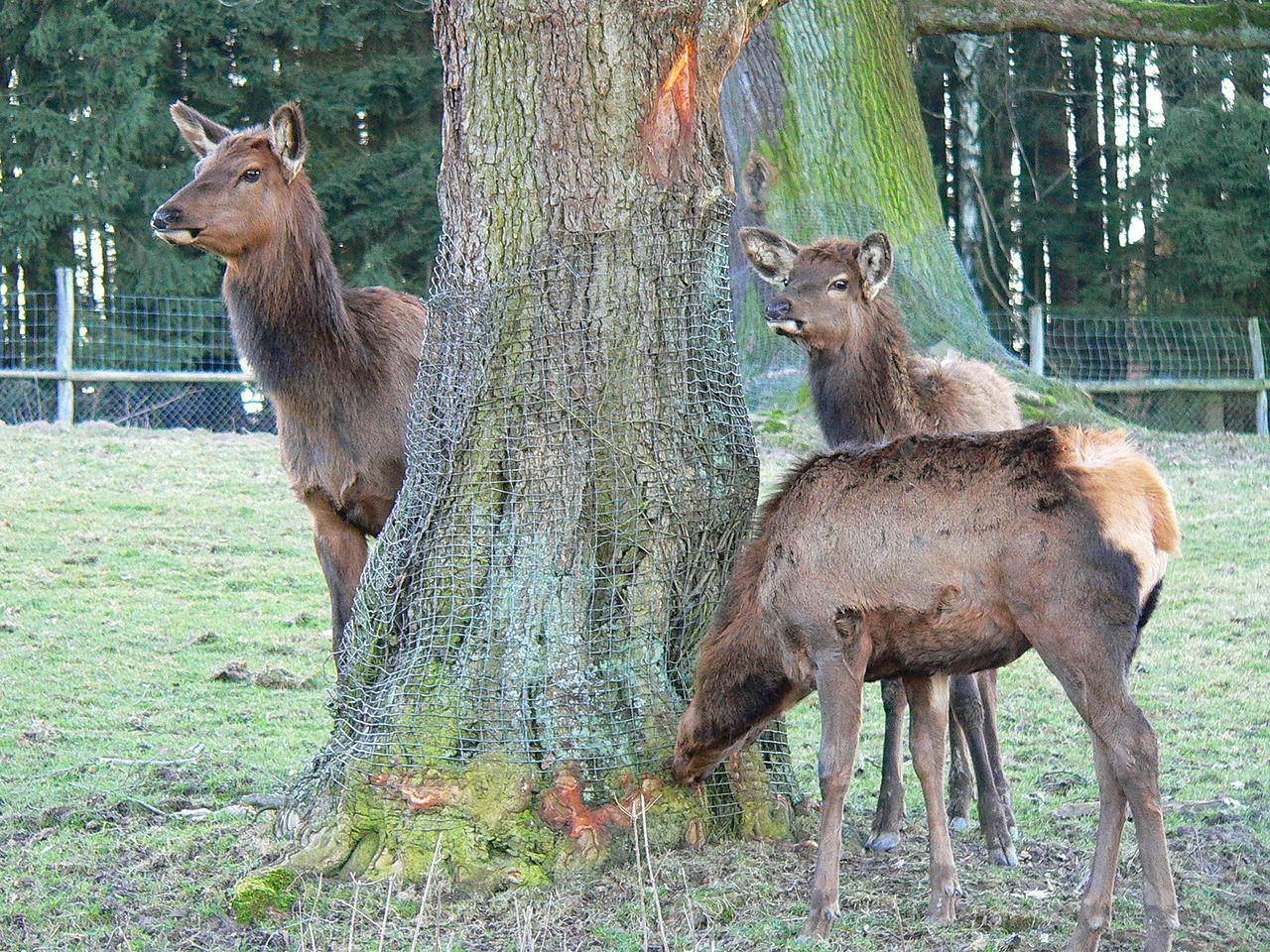 Tierpark In Hessen