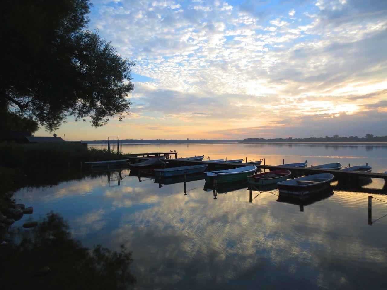 Bild Kraniche am Schaalsee