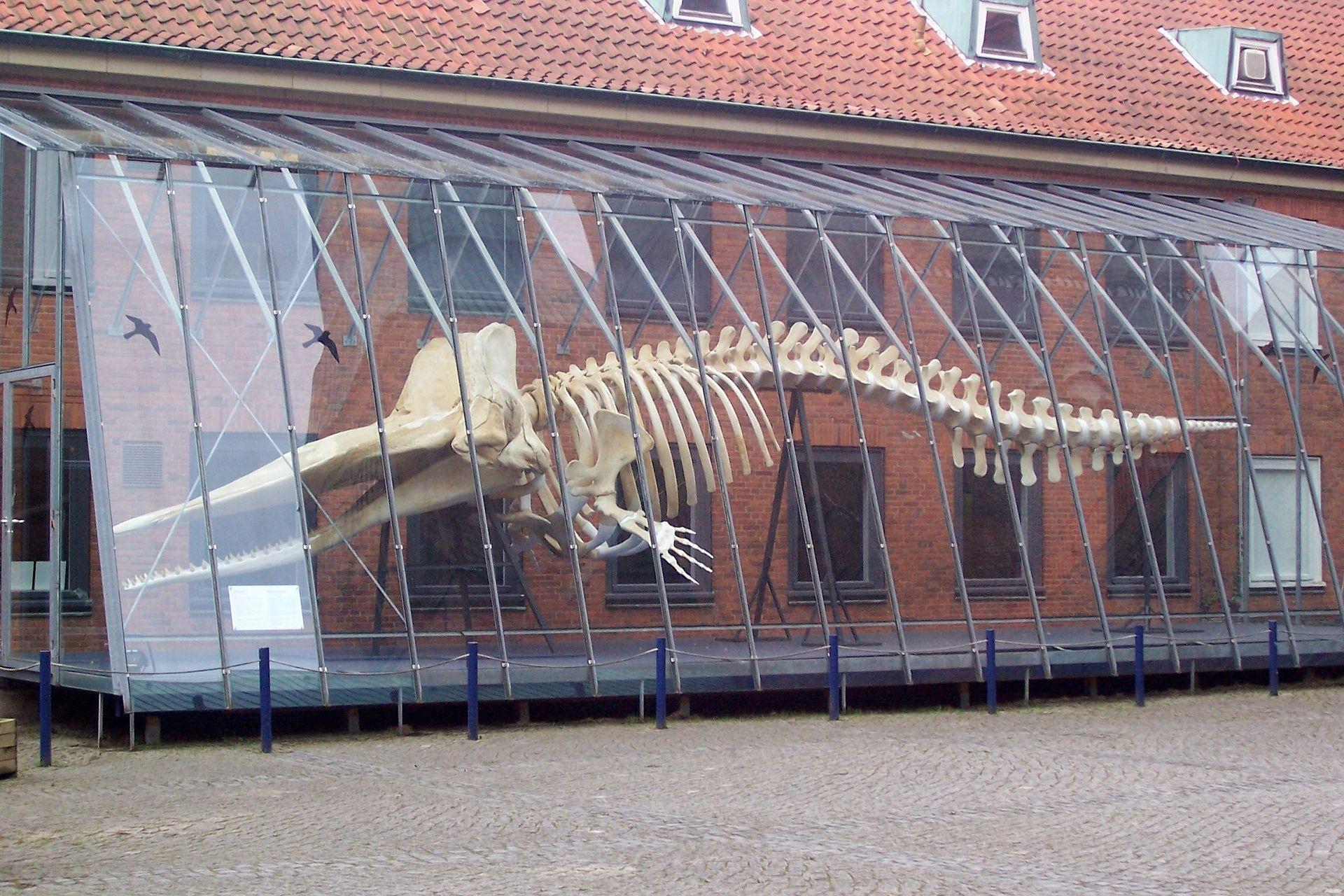 Bild Museum für Natur und Umwelt Lübeck