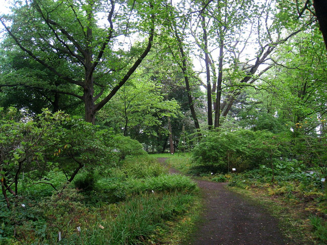 Bild Späth Arboretum der Humboldt Universität zu Berlin