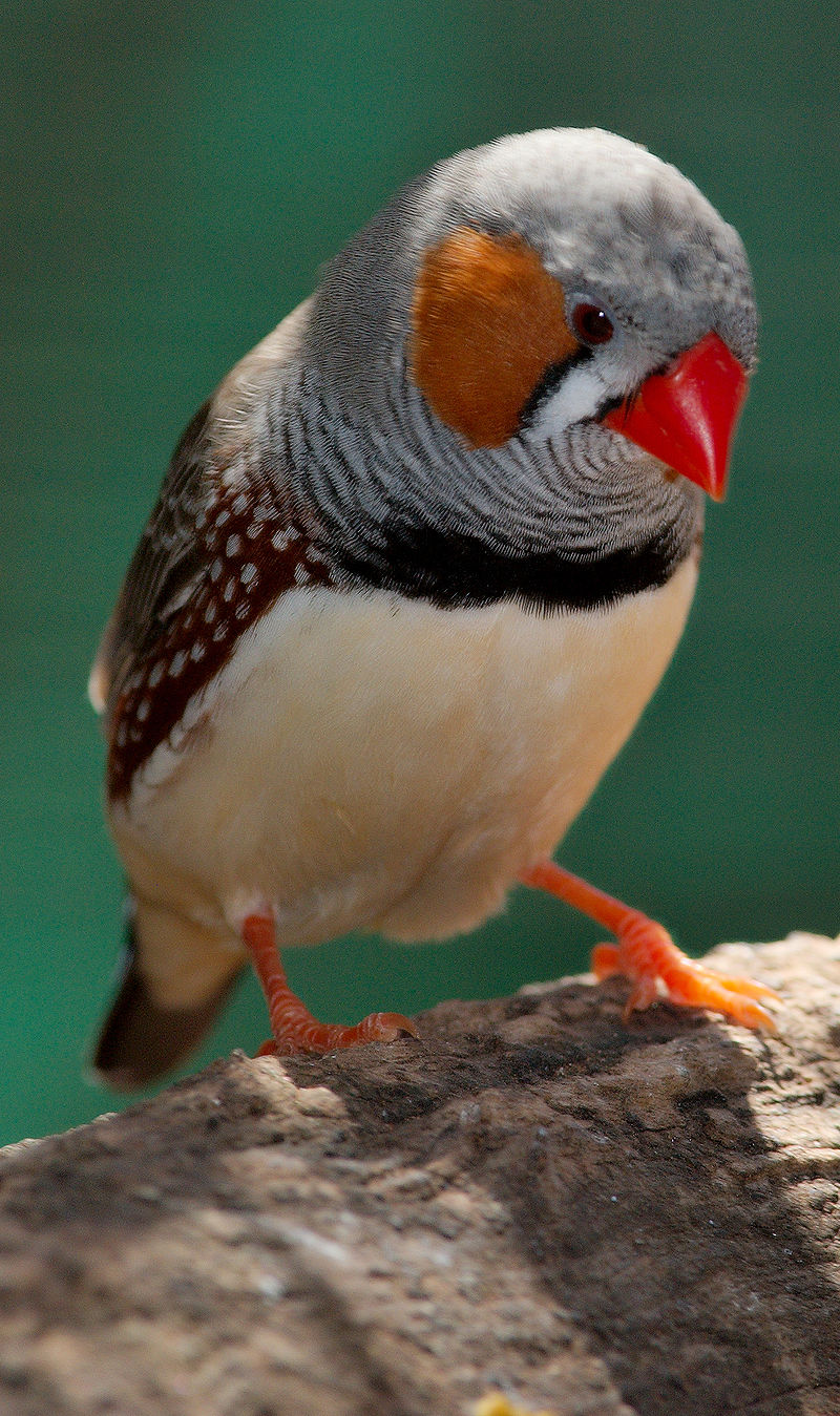 Bild Vogelpark Biebesheim