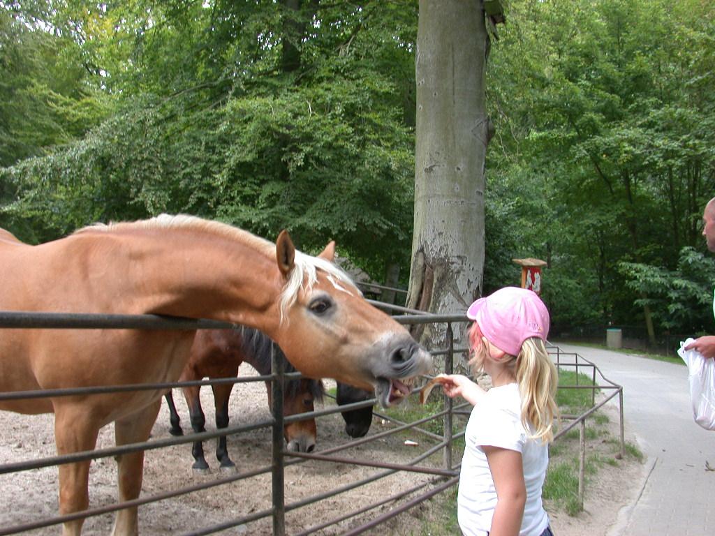 Bild Tierpark Sassnitz