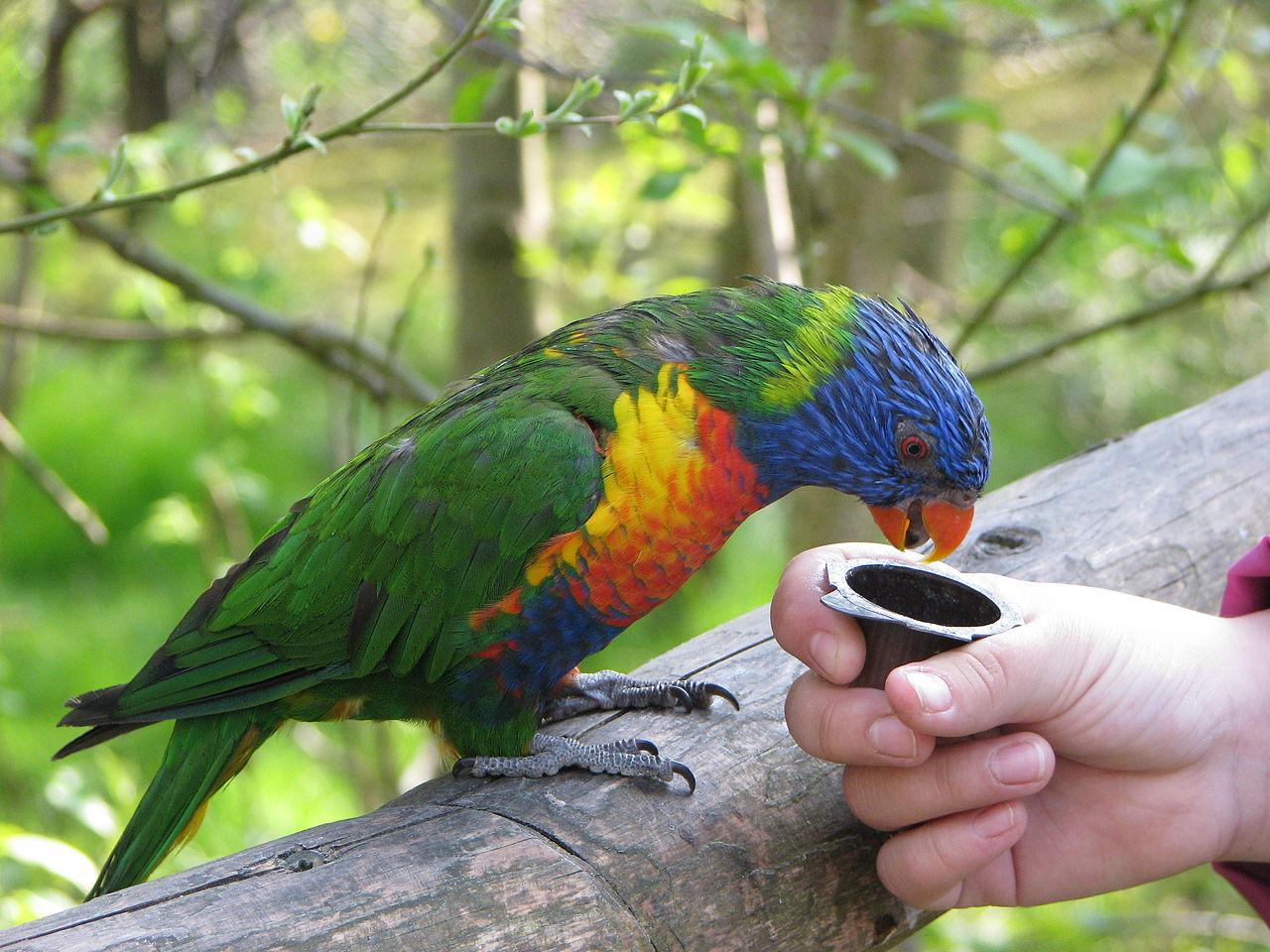 Bild Vogelpark Marlow