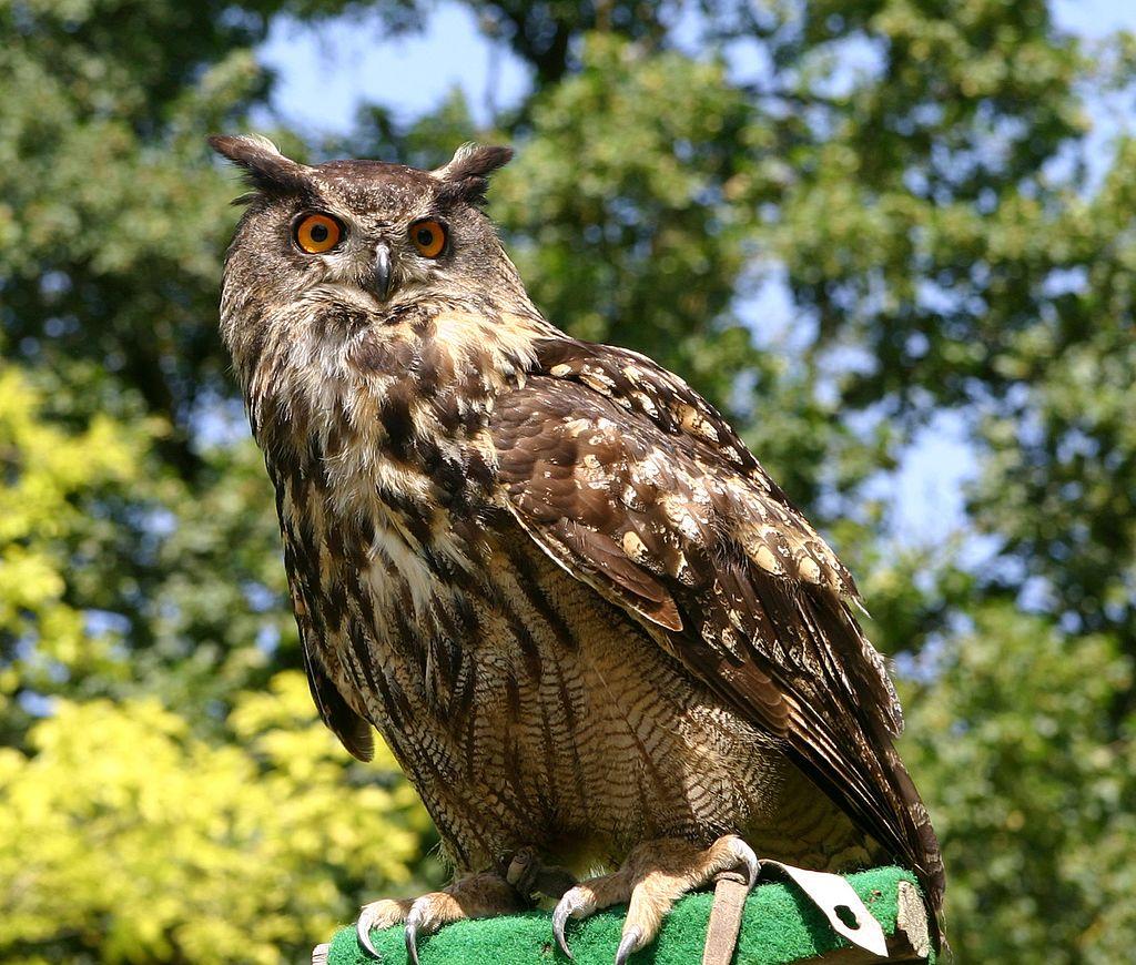 Bild Vogel und Umweltstation Regenstauf