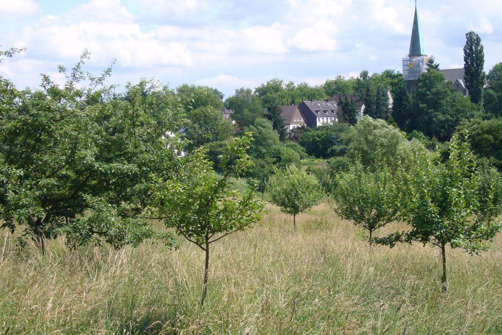 Bild Umweltkulturpark Dortmund
