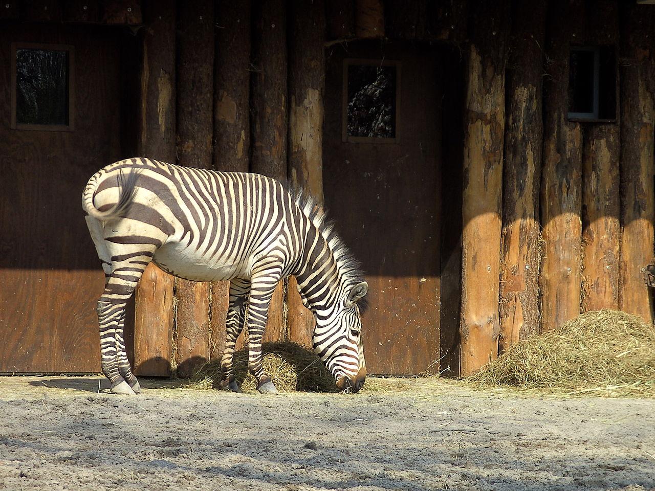 Bild Zoo Landau in der Pfalz