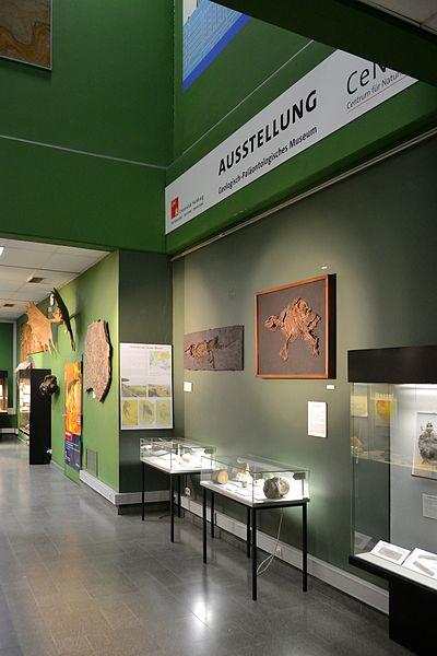 Bild Geologisch Paläontologisches Museum Hamburg