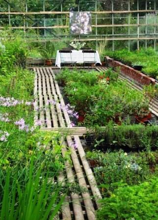 Bild herbs kräutergarten Nuttel
