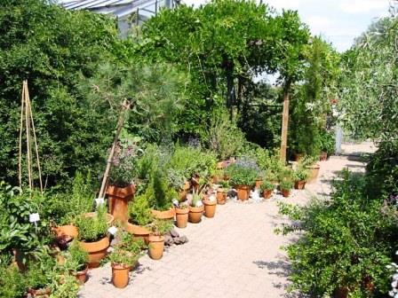 Bild Arzneipflanzengarten Braunschweig