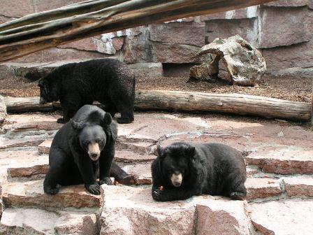 Bild Zoo Halle Saale