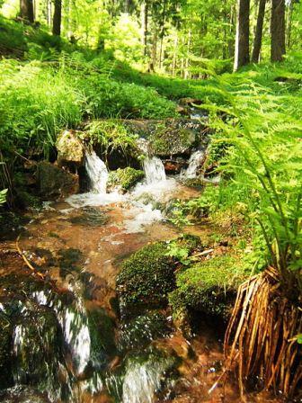 Bild Biosphärenreservat Vessertal Thüringer Wald