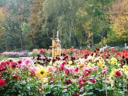 Bild Dahliengarten Gera